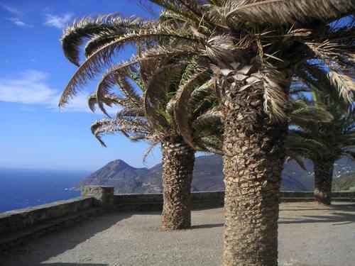 Canari clocher palmiers