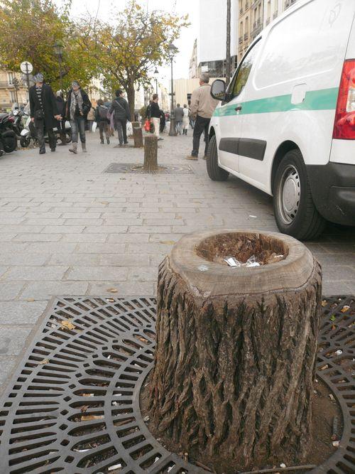 St paul espace arbres coupés