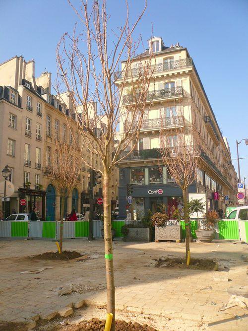 St paul espace arbres nouveaux 15 03 12