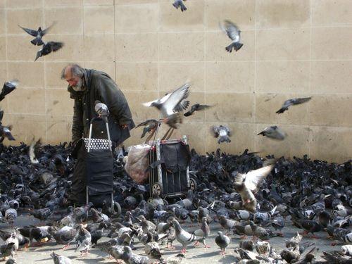 Nourrisseur 2 de pigeons 20 09 12