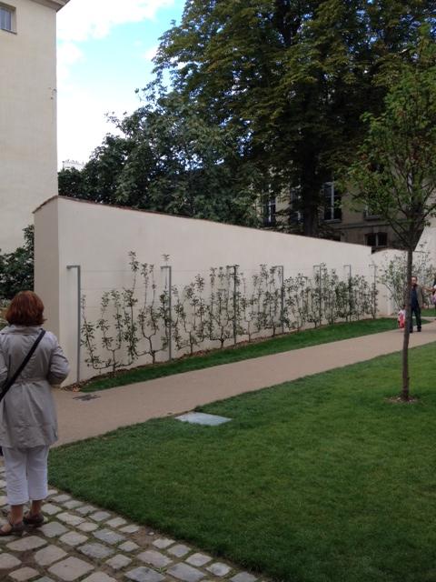 planter une vigne le long d'un mur