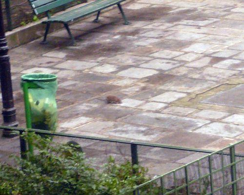 Jardin temple haudriettes rat 23 01 13