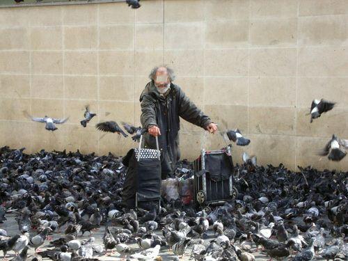 Nourrisseur 1 de pigeons 20 09 12
