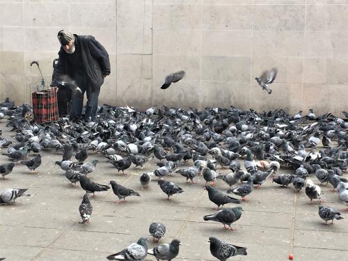 Nourrisseur de pigeons bascoulergue 31 12 16